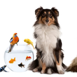 A Closer Look at Low Cost Pet Insurance