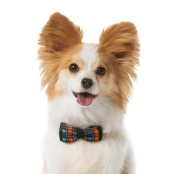 Cheap Pet Insurance - More Valuable Than You Think