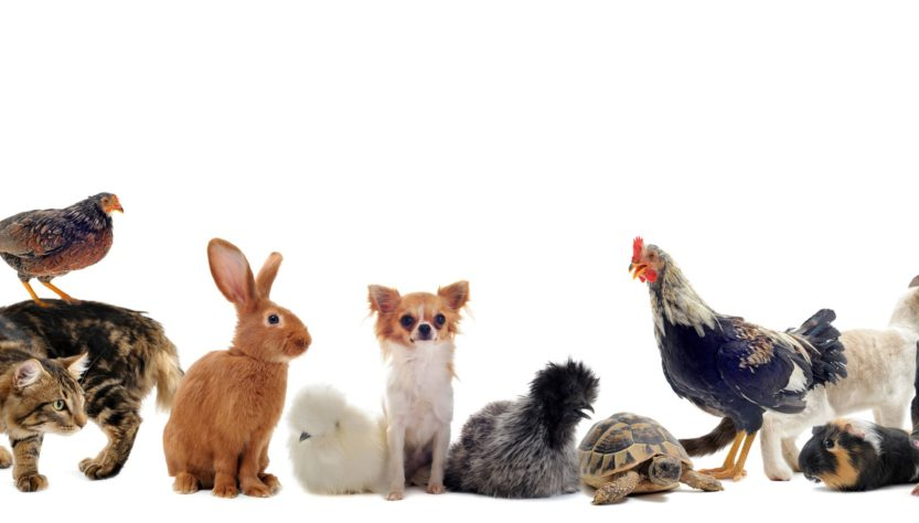 Healthy Pet Insurance - 2 Must Know Tips If Your Serious About Insuring Your Pet
