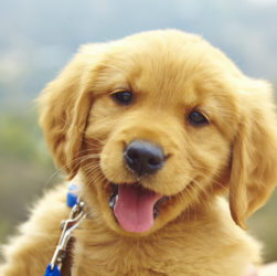 Why Pet Insurance is Important For Your Pets