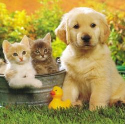 Why You Should Look For Pet Insurance